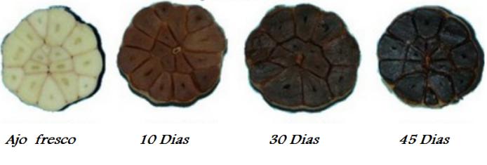 03-ajo-negro-black-garlic-ail-noir-lail-noir-daomori